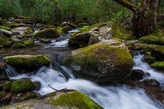 Cascatas do parque nacional de Great Smoky Mountains Foto de Stock
