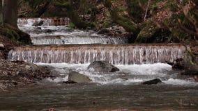 Cascatas running do rio da montanha do córrego da floresta da mola sobre rochas musgosos video estoque