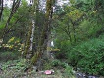 Cascate, correnti e fiumi dell'Oregon fotografie stock