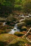 Cascate della foresta Fotografia Stock