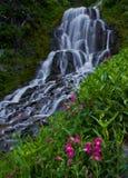 Cascate della foresta della gola del fiume Columbia fotografia stock