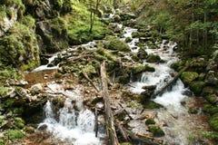 Cascate della montagna Fotografia Stock