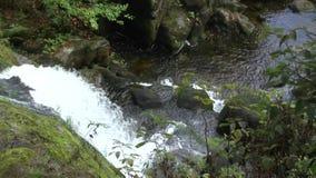 Cascate di Triberg nella foresta nera video d archivio