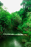 Cascate, foreste, canali navigabili Fotografie Stock