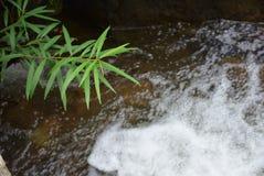 Cascate in giungla Fotografie Stock