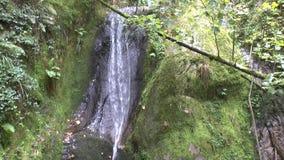 Cascate gravi nobili nella foresta nera stock footage