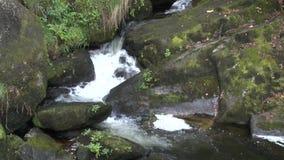 Cascate gravi nobili nella foresta nera video d archivio