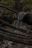 Cascate immerse nel verde di una foresta fotografia stock