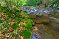 Cascate incontaminate in profondità nel legno, in autunno fotografie stock