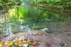 Cascate incontaminate in profondità nel legno, in autunno immagini stock libere da diritti