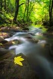Cascate incontaminate in profondità nel legno, in autunno immagine stock libera da diritti