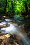 Cascate incontaminate in profondità nel legno, in autunno fotografie stock libere da diritti