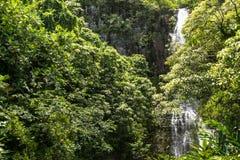 Il fico di strangler strangola un albero di cypress for Albero fico prezzo
