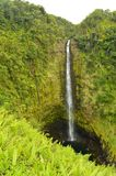 Cascate meravigliose circondate da vegetazione impressionante fotografia stock libera da diritti