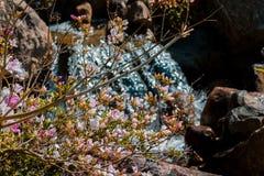 Cascate nascoste dietro i cespugli di fioritura in Frederik Meijer Gardens immagini stock libere da diritti