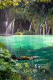 Cascate nei laghi parco nazionale, Croazia Plitvice I laghi hanno un blu sorprendente, un turchese o un colore verde smeraldo fotografia stock libera da diritti