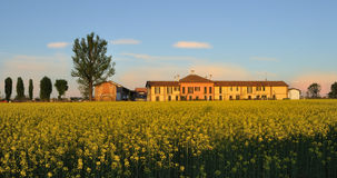 Cascina rural building with field mustard (Brassic. Cascina italian rural building with field mustard (Brassica rapa) field at sunset in Pianura Padana (northern Royalty Free Stock Photo