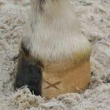 Casco marcado do cavalo - detalhe imagem de stock