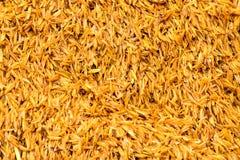 Cascos del arroz Imagen de archivo libre de regalías