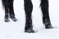 Cascos do cavalo do frisão imagens de stock