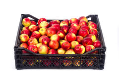 Case with apples Stock Photography