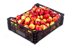Case with apples Stock Photo