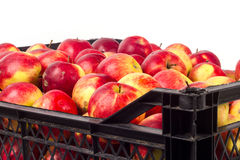 Case with apples Royalty Free Stock Photos