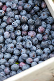 Case of Blueberries Royalty Free Stock Image