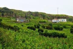 Case concrete sotto la collina dal campo del raccolto Fotografia Stock Libera da Diritti