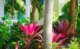 Case del centro della via di Key West in Florida Fotografia Stock