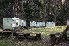 Case di ape Fotografia Stock Libera da Diritti