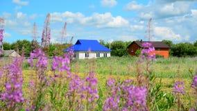 Case rurali contro fondo dei wildflowers di estate La Russia archivi video