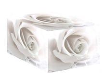 Casella bianca della Rosa Immagine Stock