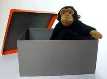 Casella con la scimmia Fotografie Stock
