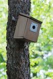Casella del Bluebird sull'albero Immagine Stock