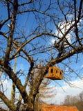 Casella di allevamento dell'uccello Immagini Stock