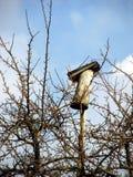 Casella di allevamento dell'uccello Fotografia Stock