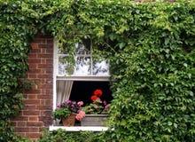 Casella di finestra Fotografia Stock