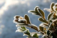 Casella di inverno Fotografie Stock