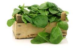 Casella di legno con spinaci appena raccolti Fotografia Stock Libera da Diritti