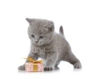 Casella di regalo e del gattino Immagini Stock