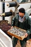 Casella di trasporto del pescatore con i pesci Fotografie Stock
