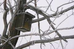 Casella di uccello Fotografia Stock Libera da Diritti