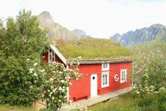 Casetta del Lofoten con erba sul tetto Fotografia Stock Libera da Diritti