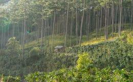 Casetta in foreste dei pini e vetro giallo Immagine Stock