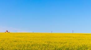 Casetta nel giacimento di fiori giallo con le chiare linee di trasmissione e del cielo blu Primavera e paesaggio rurale di estate Fotografia Stock