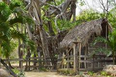 Casetta nella foresta degli alberi di banyan Fotografia Stock
