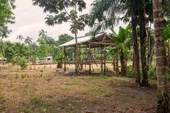 Casetta, riserva faunistica di Cuyabeno Fotografia Stock Libera da Diritti
