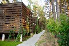 Casette di legno nel legno di pino Immagine Stock