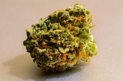 Casey Jones Kindman Nug. Small Nug of Casey Jones recreational marijuana grown by Kindman stock photos